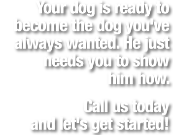 Your Dog is Ready Question 05